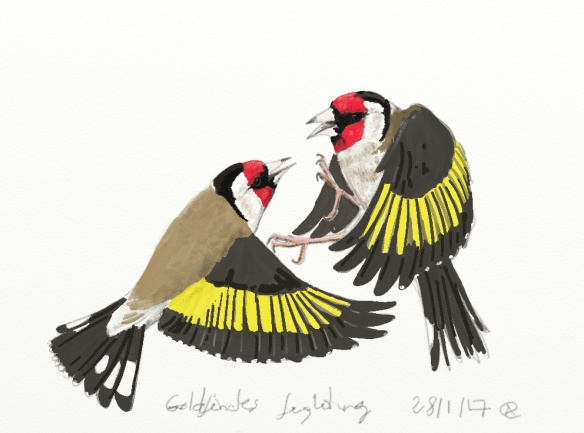goldfinches-fightingnew
