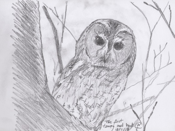 the-first-tawny-owl-hoot